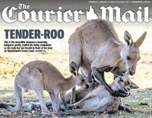 kangaroo2